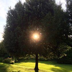 sesonrose-giardino-004