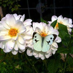 sesonrose-giardino-005
